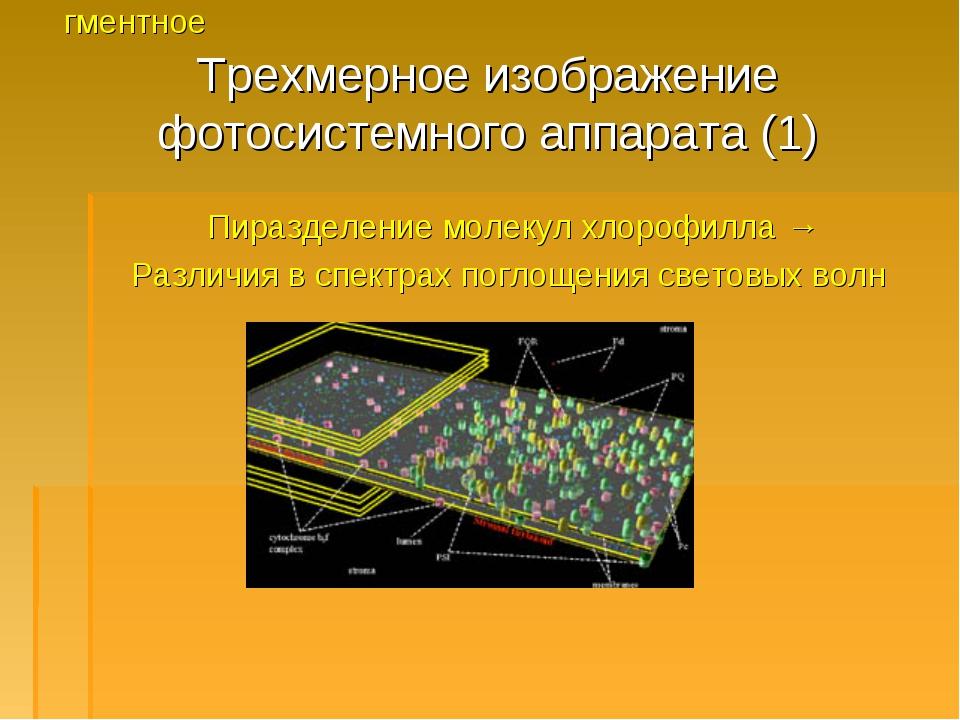 Трехмерное изображение фотосистемного аппарата (1) Пиразделение молекул хлоро...