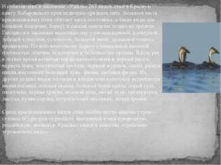 Из обитающих в заказнике «Удыль» 267 видов птиц в Красную книгу Хабаровского