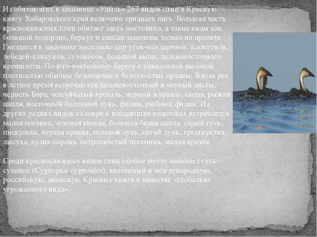 Из обитающих в заказнике «Удыль» 267 видов птиц в Красную книгу Хабаровского...