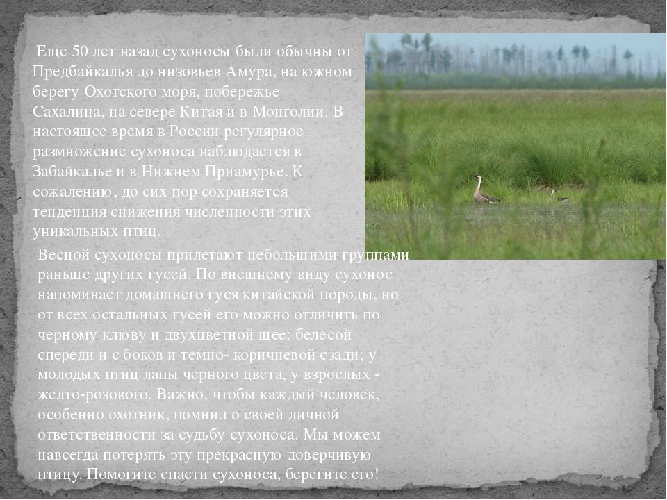 Еще 50 лет назад сухоносы были обычны от Предбайкалья до низовьев Амура, на...
