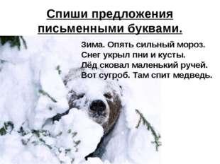 Спиши предложения письменными буквами. Зима. Опять сильный мороз. Снег укрыл