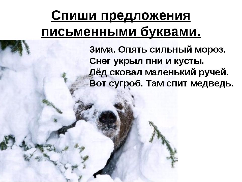 Спиши предложения письменными буквами. Зима. Опять сильный мороз. Снег укрыл...