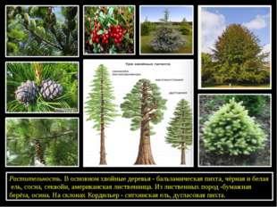 Растительность. В основном хвойные деревья - бальзамическая пихта, чёрная и