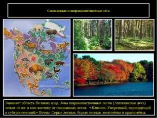 Смешанные и широколиственные леса Занимает область Великих озер. Зона широко