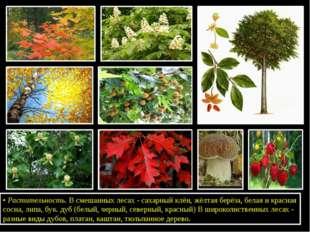 •Растительность. В смешанных лесах - сахарный клён, жёлтая берёза, белая и