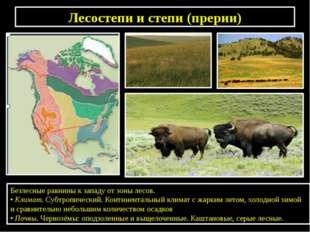 Лесостепи и степи (прерии) Безлесные равнины к западу от зоны лесов. •Климат