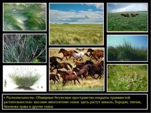 •Растительность. Обширные безлесные пространства покрыты травянистой растит
