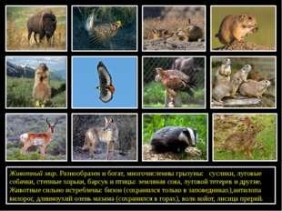 Животный мир. Разнообразен и богат, многочисленны грызуны: суслики,луговые