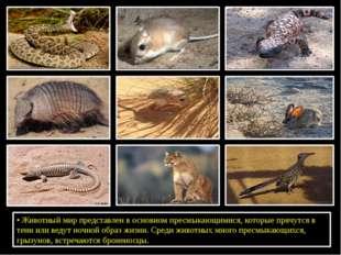 •Животный мир представлен в основном пресмыкающимися, которые прячутся в те