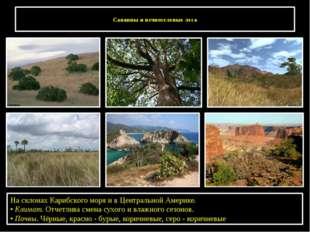 Саванны и вечнозеленые леса На склонах Карибского моря и в Центральной Амери