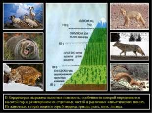 В Кордильерах выражена высотная поясность, особенности которой определяются