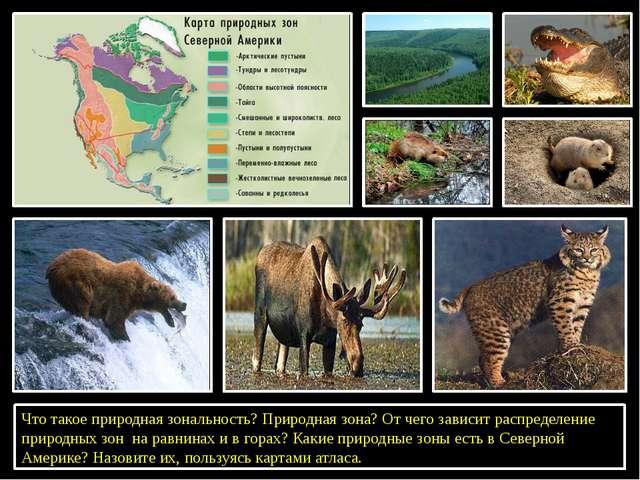Что такое природная зональность? Природная зона? От чего зависит распределен...
