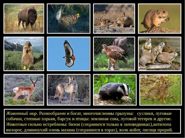 Животный мир. Разнообразен и богат, многочисленны грызуны: суслики,луговые...