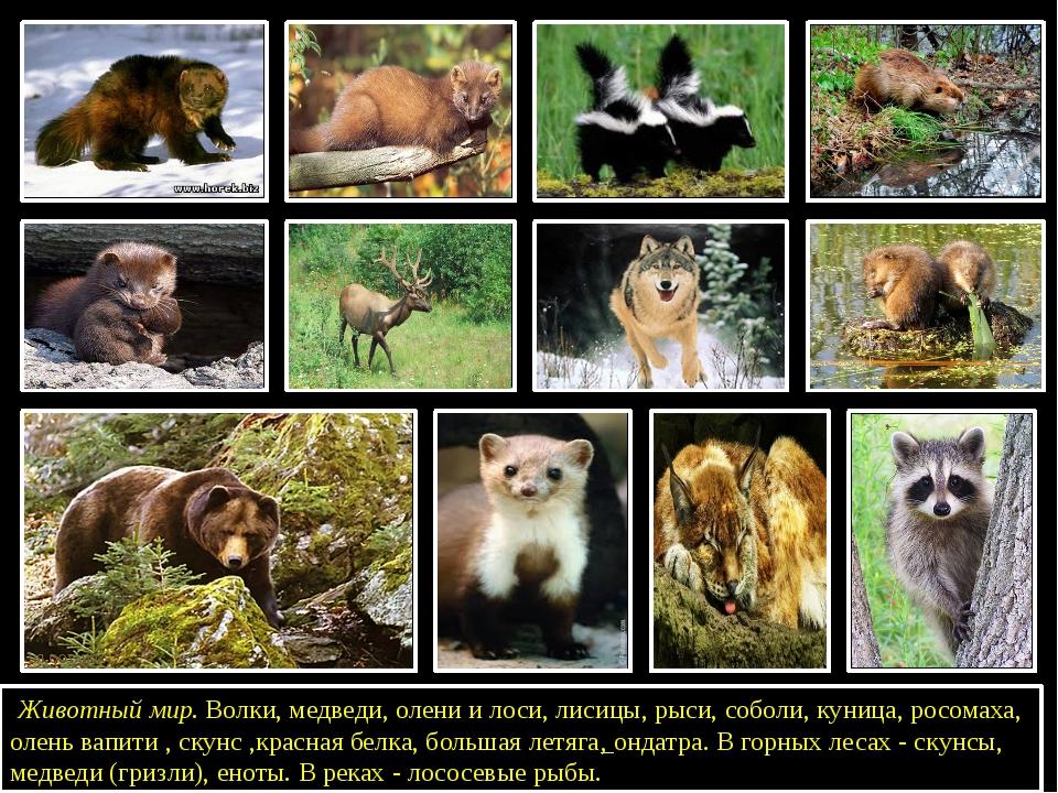 Животный мир. Волки, медведи, олени и лоси, лисицы, рыси, соболи, куница, р...