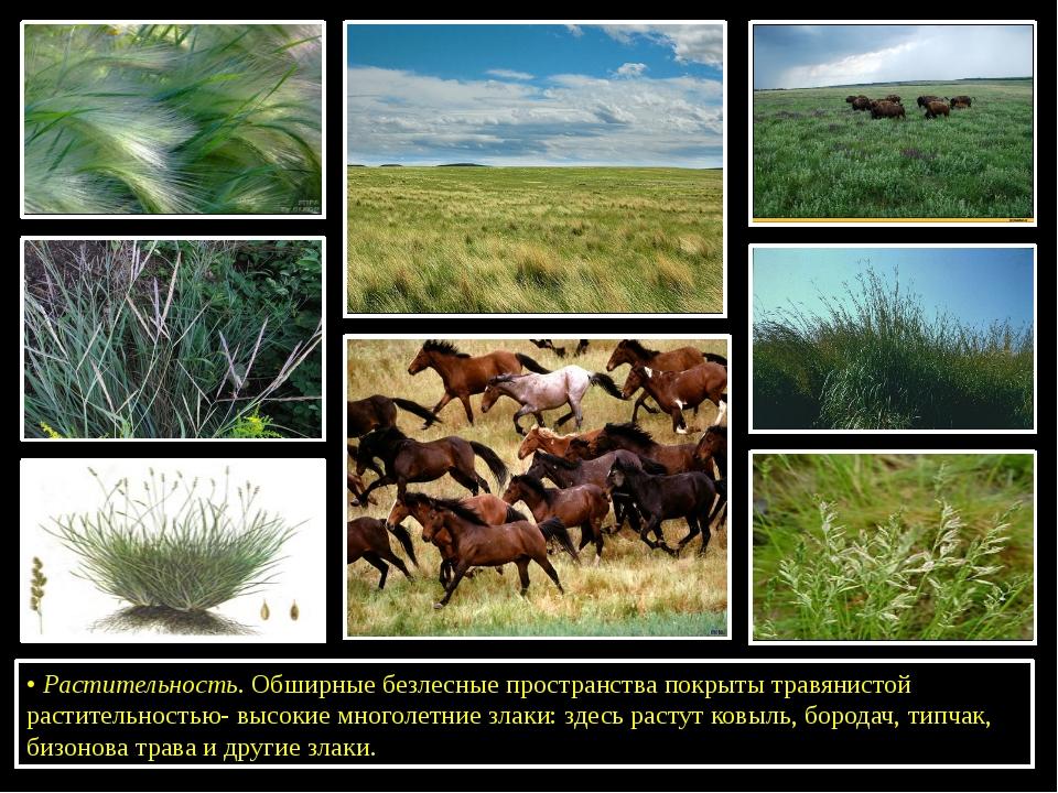 •Растительность. Обширные безлесные пространства покрыты травянистой растит...