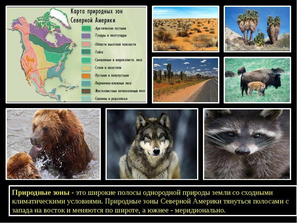 Природные зоны - это широкие полосы однородной природы земли со сходными кли...