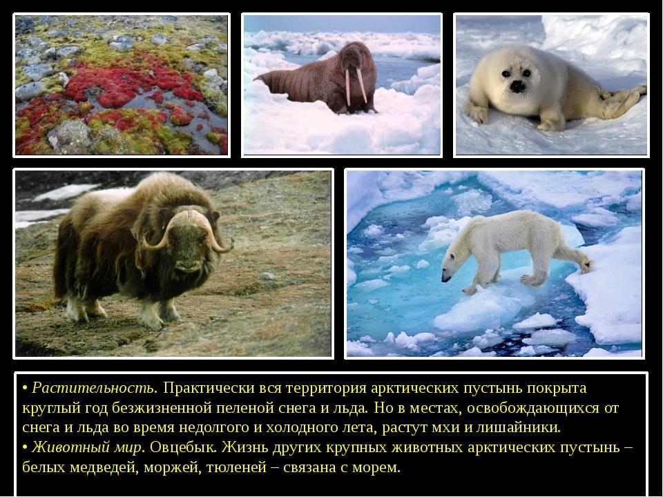 •Растительность. Практически вся территория арктических пустынь покрыта кру...