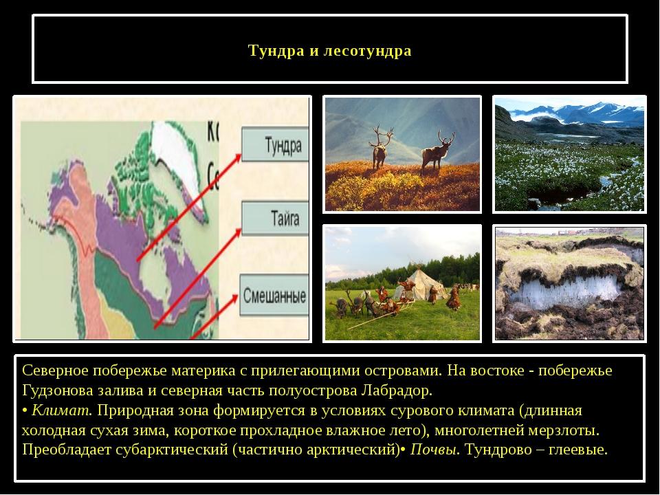Тундра и лесотундра Северное побережье материка с прилегающими островами. На...