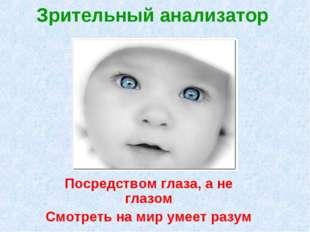 Зрительный анализатор Посредством глаза, а не глазом Смотреть на мир умеет ра