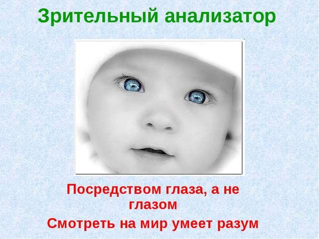 Зрительный анализатор Посредством глаза, а не глазом Смотреть на мир умеет ра...