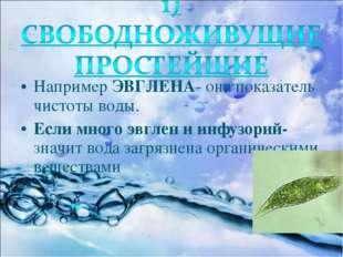 Например ЭВГЛЕНА- она показатель чистоты воды. Если много эвглен и инфузорий-