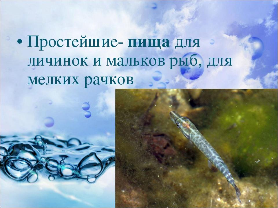 Простейшие- пища для личинок и мальков рыб, для мелких рачков