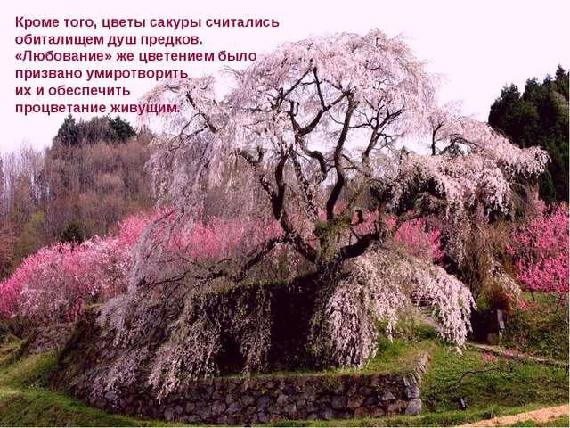 Кроме того, цветы сакуры считались обиталищем душ предков. «Любование» же цве...