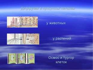 Диффузия в процессах питания у животных у растений Осмос и тургор клеток