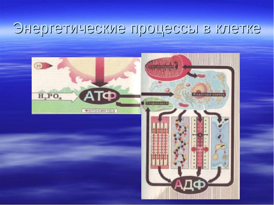Энергетические процессы в клетке