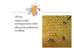 Пчёлы строили свои шестиугольные соты задолго до появления человека.