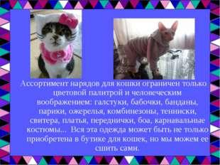 Ассортимент нарядов для кошки ограничен только цветовой палитрой и человеческ