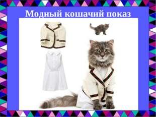 Модный кошачий показ