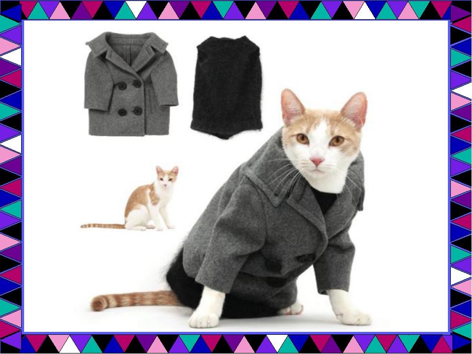 """Проект по технологии """"Одежда для кошек&quot"""
