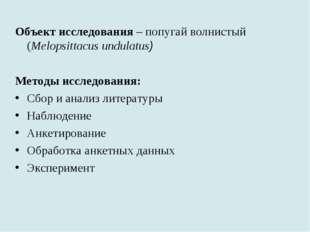 Объект исследования – попугай волнистый (Melopsittacus undulatus) Методы иссл