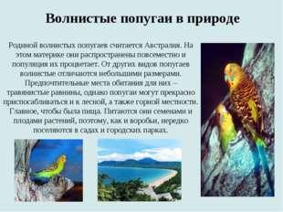 Волнистые попугаи в природе Родиной волнистых попугаев считается Австралия. Н