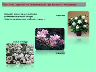 Белый олеандр магнолия гардения Сильный аромат представленных растений вызыва