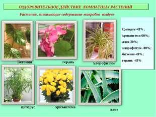 Растения, снижающие содержание микробов воздухе Бегония герань циперус хризан