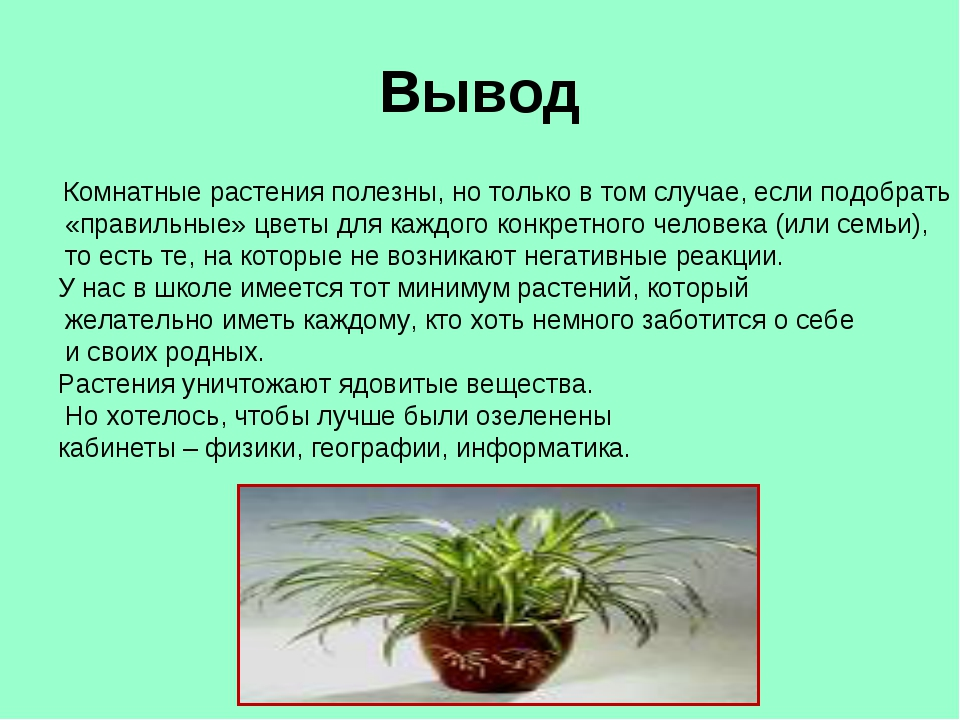 Вывод Комнатные растения полезны, но только в том случае, если подобрать «пра...