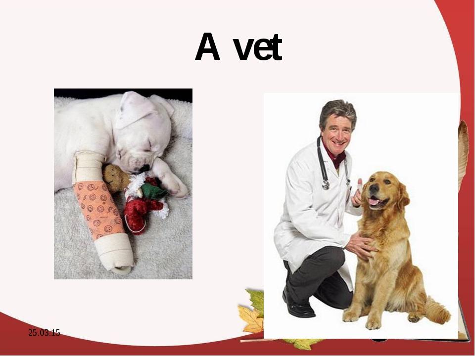 A vet * *