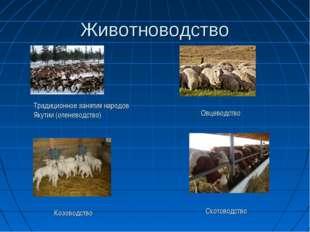 Животноводство Традиционное занятия народов Якутии (оленеводство) Овцеводство