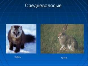 Средневолосые Соболь Кролик