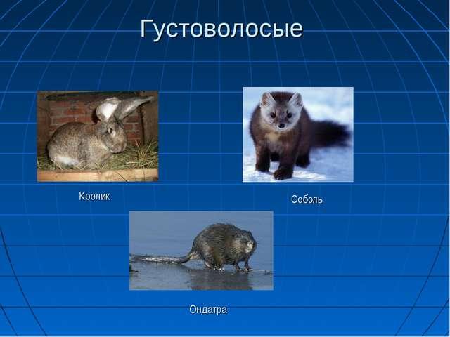 Густоволосые Ондатра Соболь Кролик