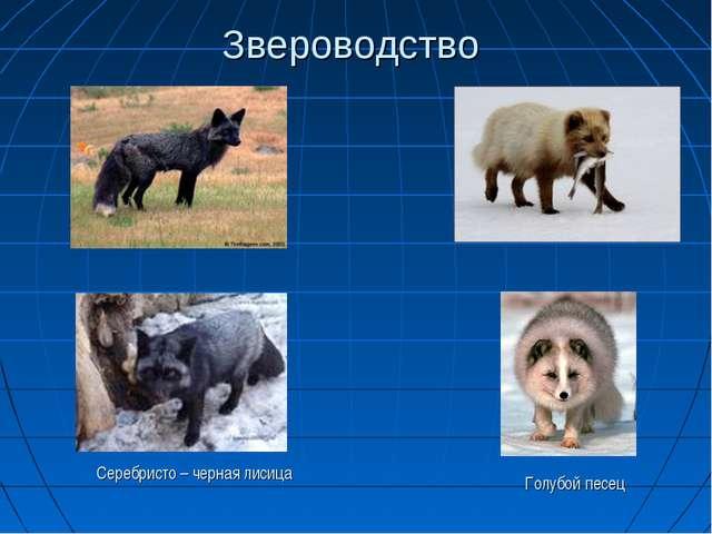 Звероводство Серебристо – черная лисица Голубой песец