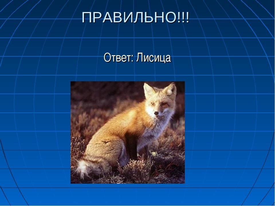 ПРАВИЛЬНО!!! Ответ: Лисица