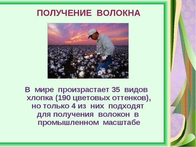 ПОЛУЧЕНИЕ ВОЛОКНА В мире произрастает 35 видов хлопка (190 цветовых оттенков)...