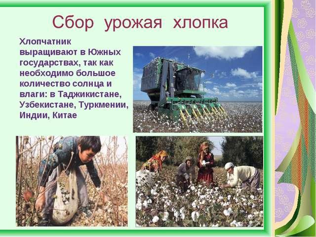 Хлопчатник выращивают в Южных государствах, так как необходимо большое количе...