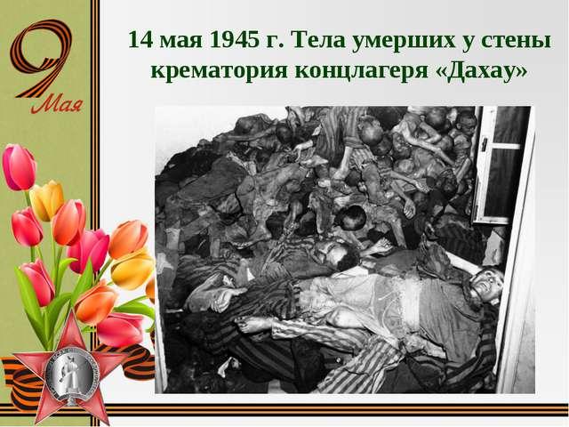 14 мая 1945 г. Тела умерших у стены крематория концлагеря «Дахау»