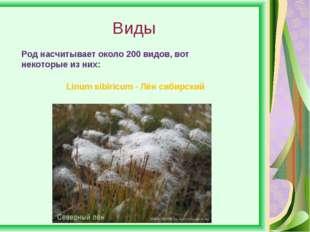 Виды Род насчитывает около 200 видов, вот некоторые из них: Linum sibiricum -
