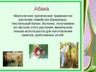 Абака Многолетнее тропическое травянистое растение семейства банановых; текст