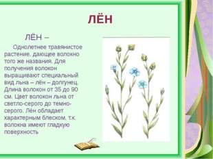 ЛЁН ЛЁН – Однолетнее травянистое растение, дающее волокно того же названия.